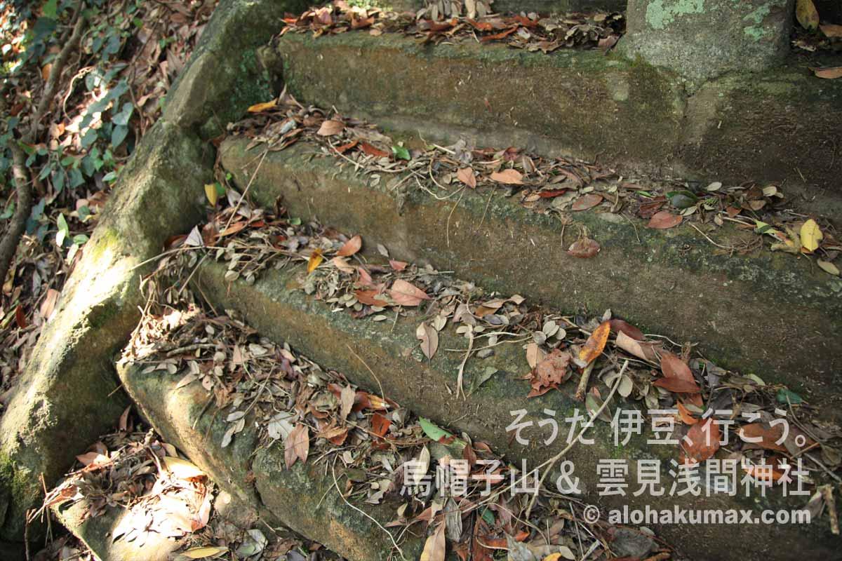 階段の落ち葉と枯れ木