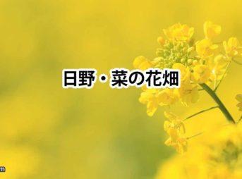 日野の菜の花畑