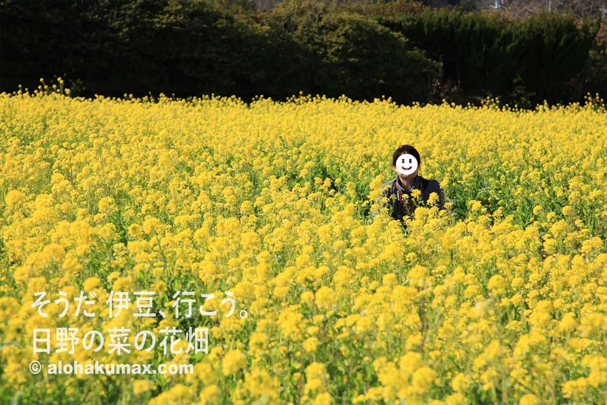 オッサンですが花にまみれてみた