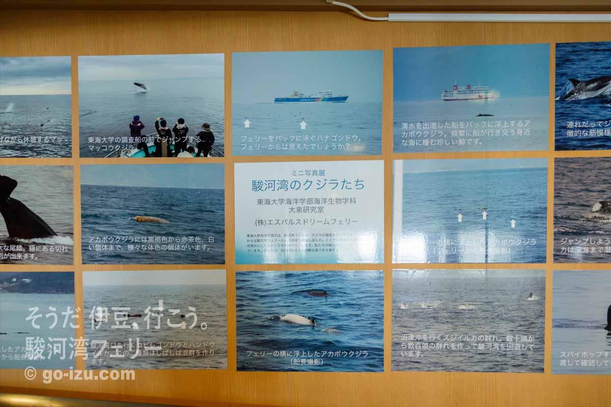 クジラの写真のパネル