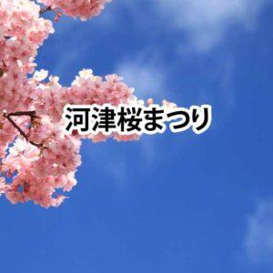 鮮やかな春色に包まれる 河津桜まつり / 河津町